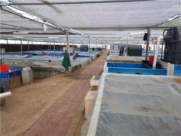 南美白对虾养殖如何进行秋季管理?河南对虾养殖招商分享给大家!