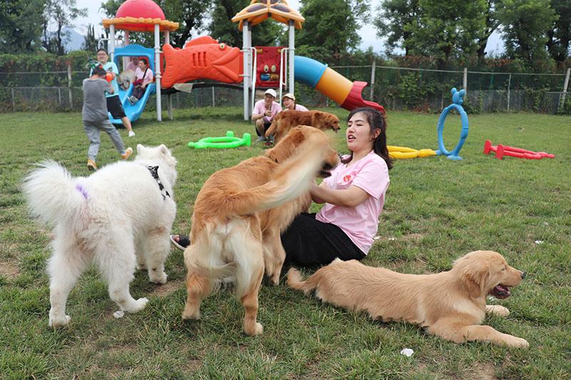 【经验】幼犬如何科学喂养?看完你就知道了