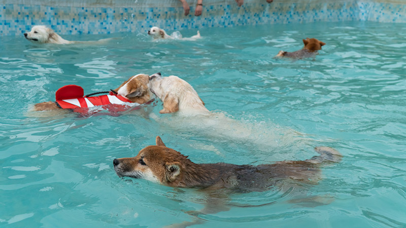 狗的各项生理机能,在哪些范围才是正常的?