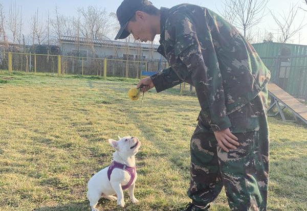 宠物犬培训课程内容