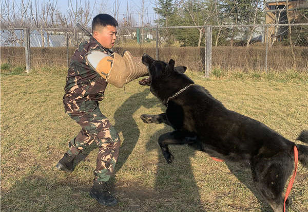延安工作犬培训在校及售后服务