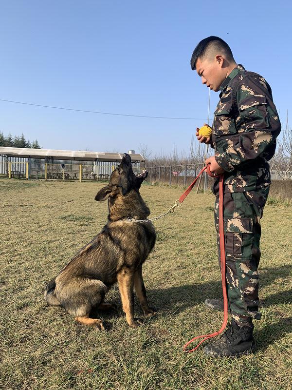 如何才能让狗狗乖乖坐下呢,跟着西安训狗学校小编一起了解下吧。