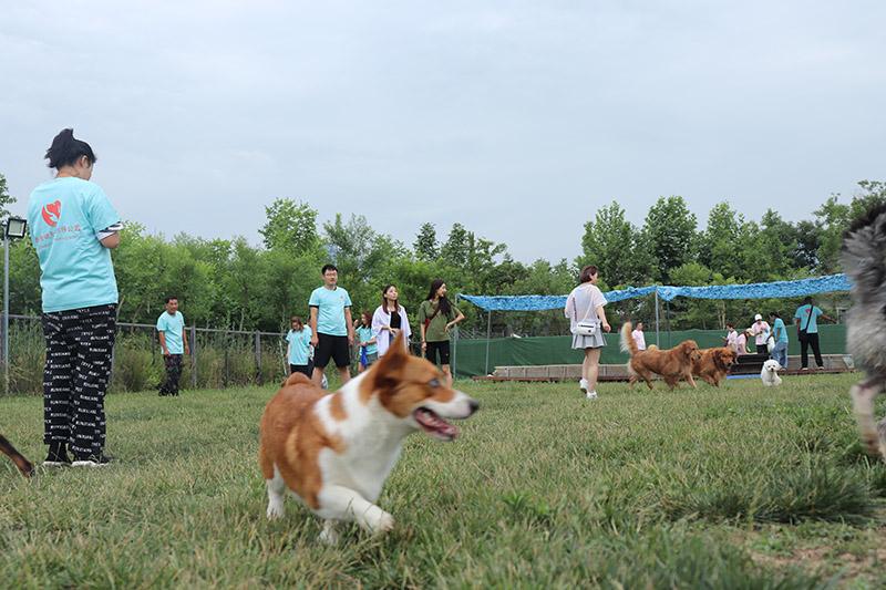 狗狗的欢乐世界--西安哮天犬宠物乐园