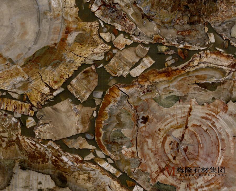 张掖木化石(伊朗)