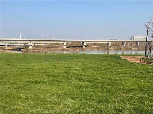 象湖公园草坪铺设