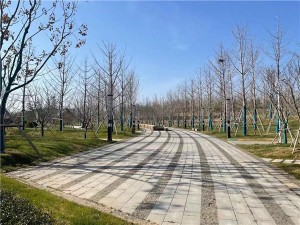 大宋园林绿化告诉您小区园林树木冬季养护管理措施