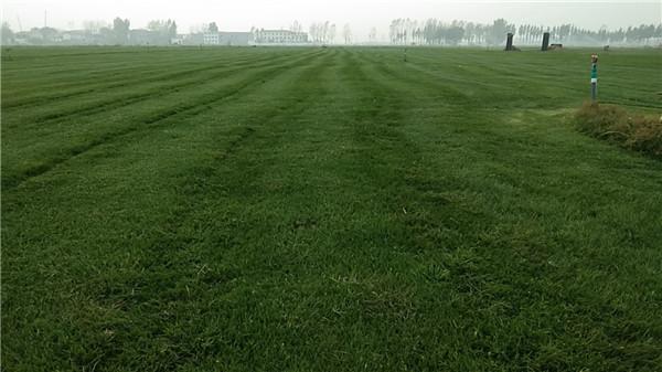草坪里长了杂草,对草坪有哪些危害呢