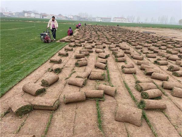 草坪基地种植