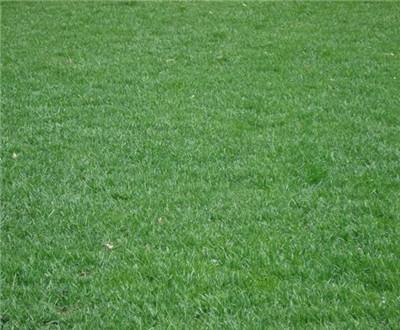 草坪基地的养护有哪些小技巧,文本带你详细了解