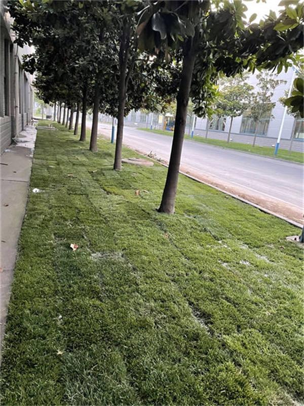 郑煤机集团草坪效果图