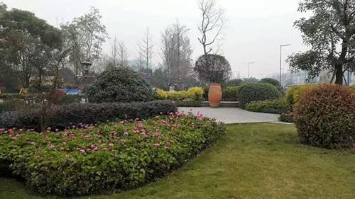 温江公园绿化苗木
