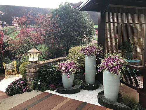 四川樱花树美化