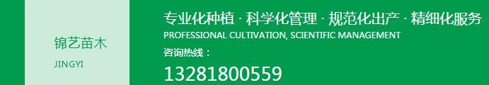 成都绿化苗木专业生产
