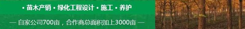 重庆绿化苗木工程