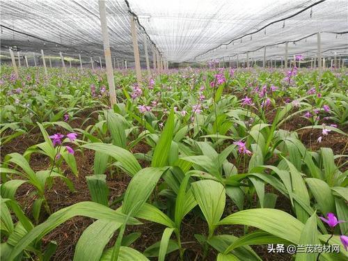 农科源种植基地