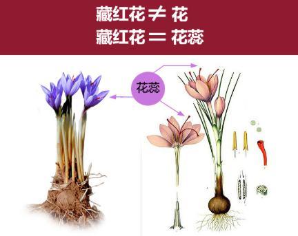 藏红花种子