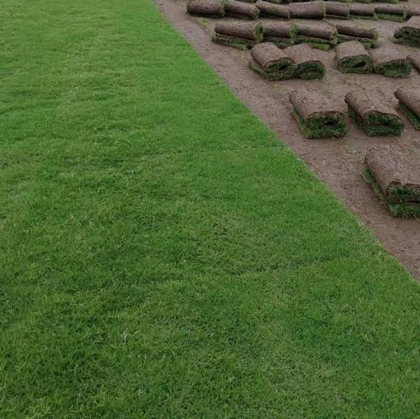河南百慕大草坪基地