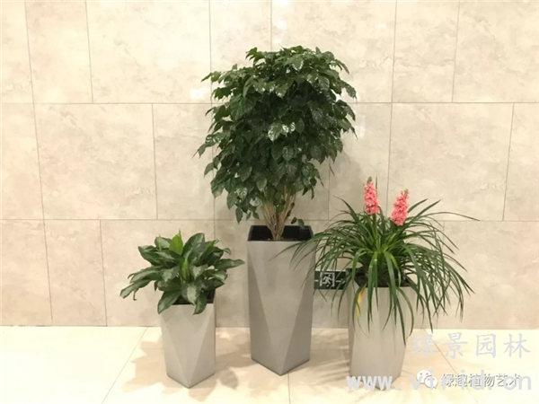 西安花卉价格