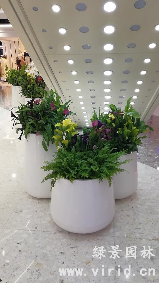 西安花卉租摆
