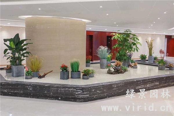 我公司成功与华为中国区合作绿植养护项目