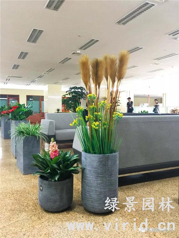 西安花卉租赁