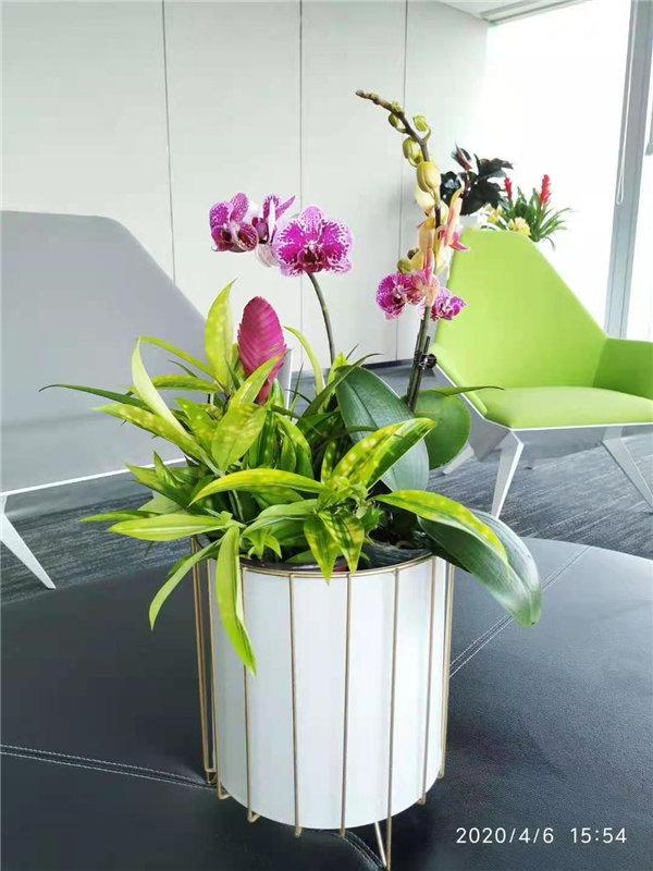 养花也是有技巧的,你知道吗?绿景园林小编给你讲讲。