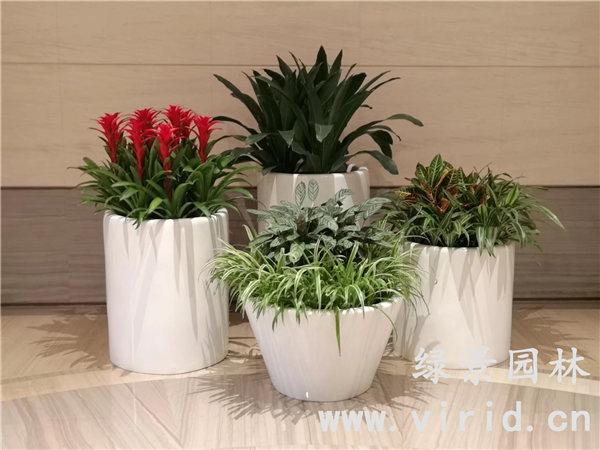 绿景园林小编和你探讨一下,花卉租赁划算吗?