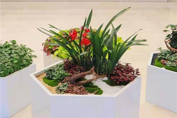 关于西安花卉租赁养护怎么收费