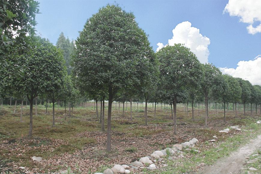 成都艺园园林绿化工程有限公司
