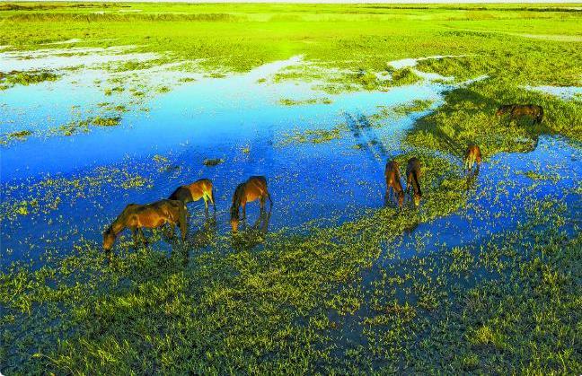 艾比湖湿地重现生机