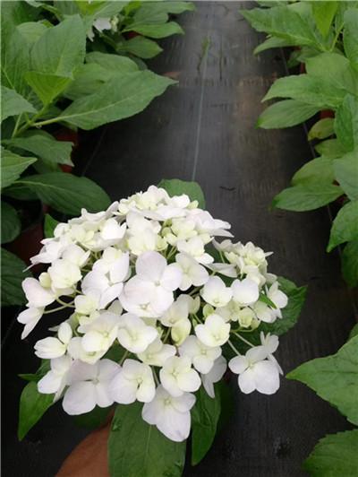庭院养上这5种观赏草,比花还美!这些你都知道嘛!