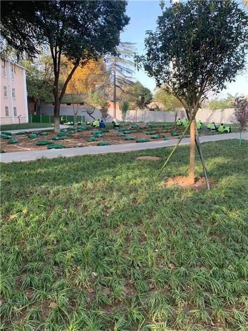 花卉苗木培育养护
