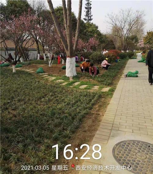 陕西观赏草施工