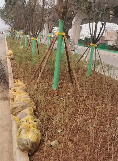 陕西道路绿化