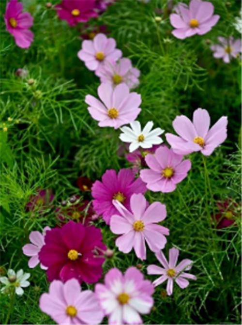 杨凌东韵分享时令花卉如何养护