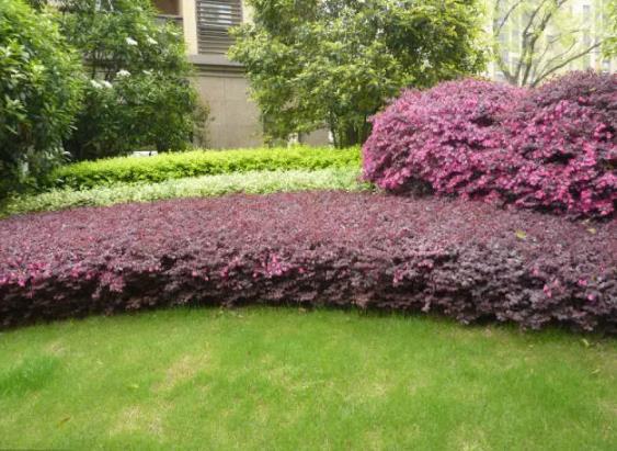 植物设计中花卉灌木植物色块的应用处理