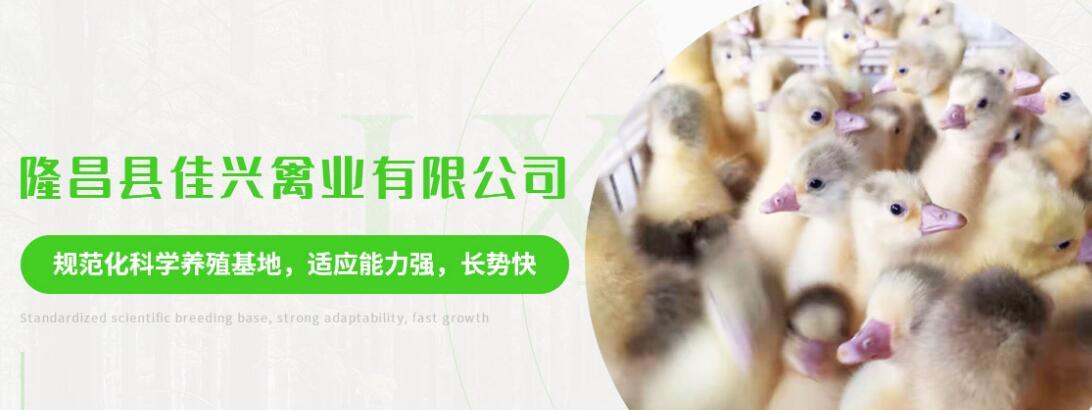 隆昌县佳兴禽业有限公司