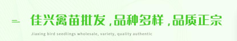 四川鹅苗孵化厂家