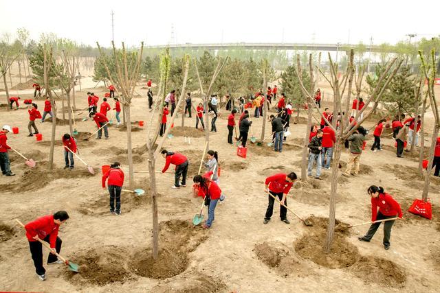 你欠多少棵树?一文读懂为什么植树是公民义务