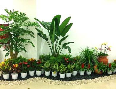 植物租赁案例