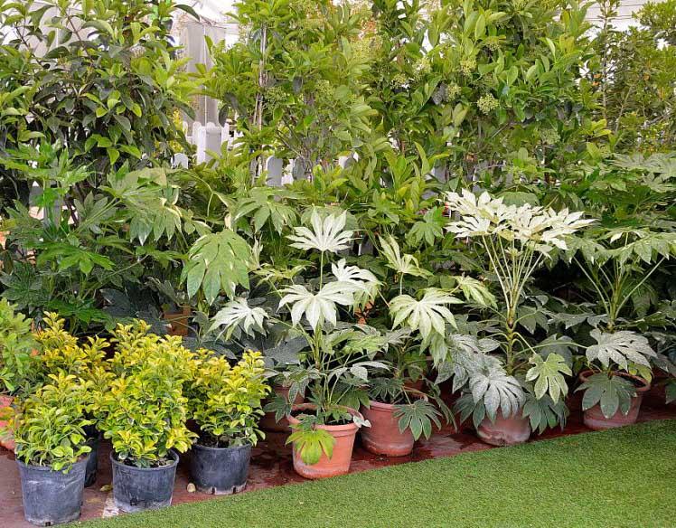 成都植物租赁
