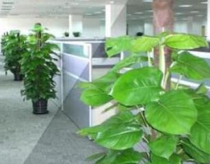 成都植物租赁公司