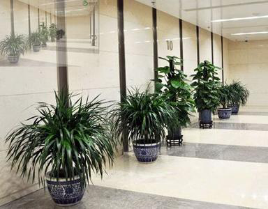 成都植物租赁厂家