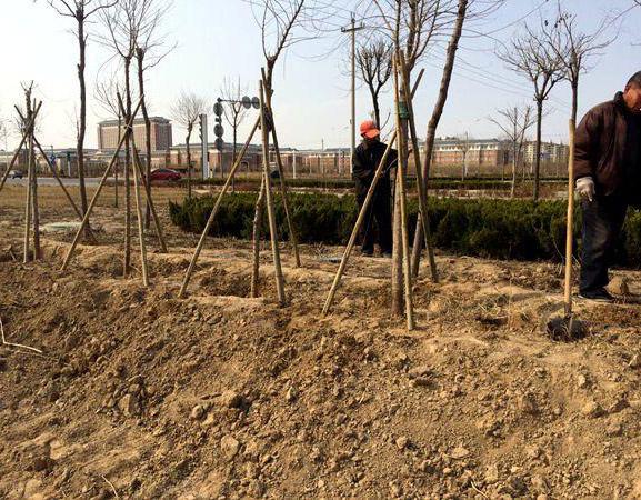 成都园林工程施工