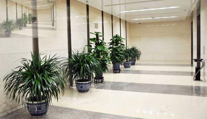 解析你所不了解的新行业——植物租赁