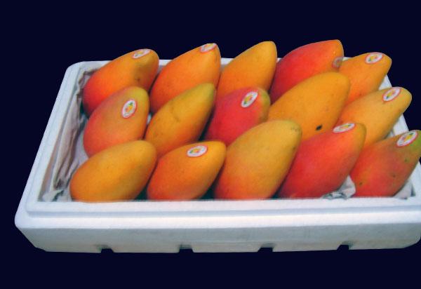 生鲜水果nba球迷网案例
