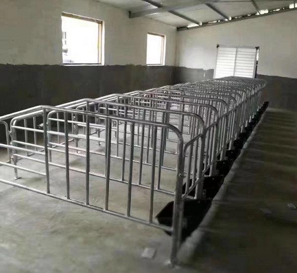 贵州某养殖厂定位栏合作案例