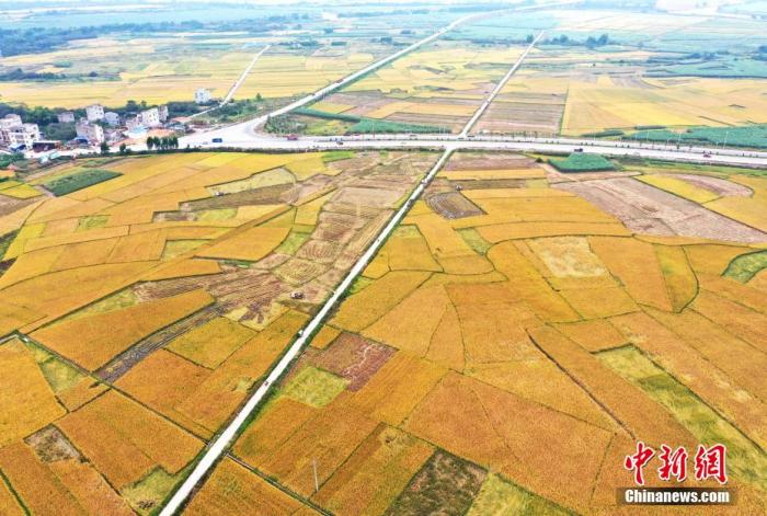 农业农村部:在全国范围内开展农业种质资源普查