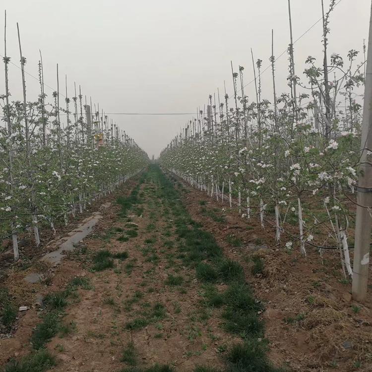 西安猕猴桃网架杆