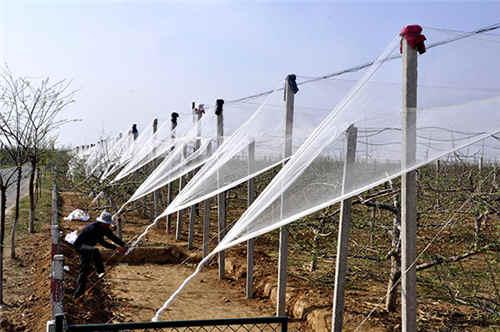 西安果树防雹网杆生产
